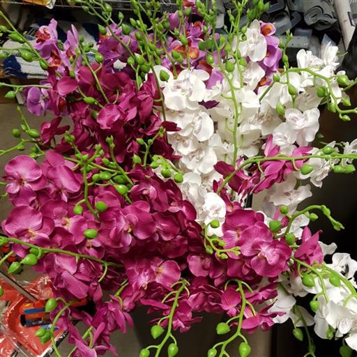 Orkidéer i plast