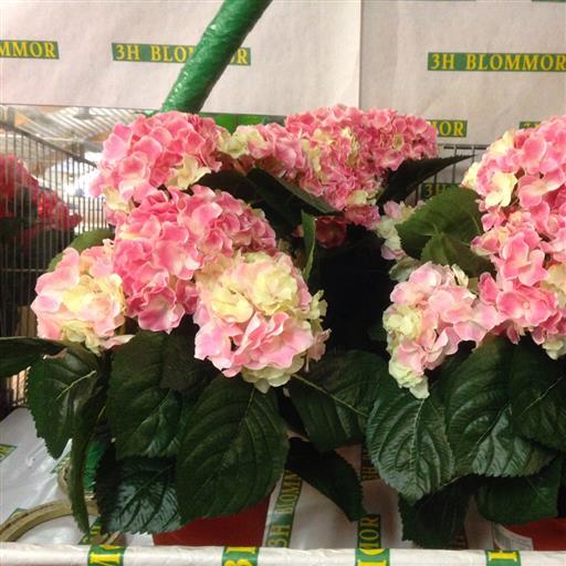 Konstgjorda Hortensia Krukväxter