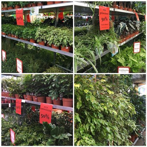 Gröna krukväxter 50%