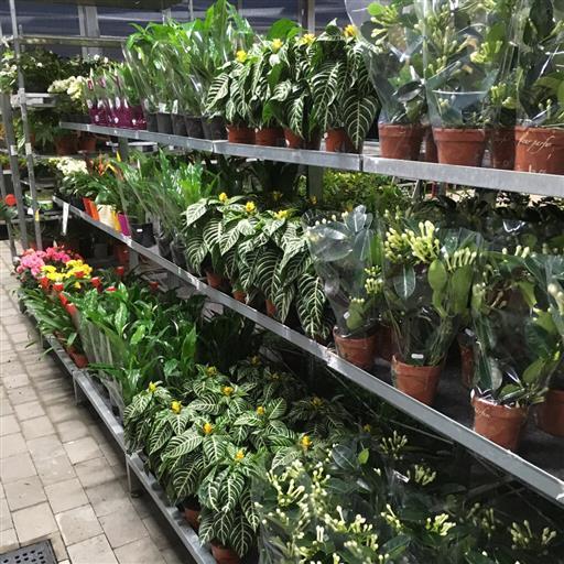 Krukväxter- stort sortiment