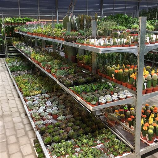 Krukväxter- stort sortiment!