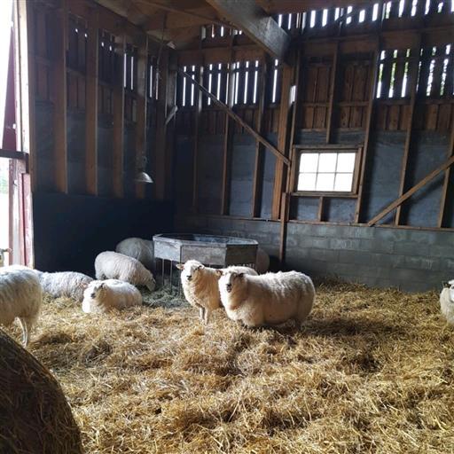 Lammlådor  Krokens Gård